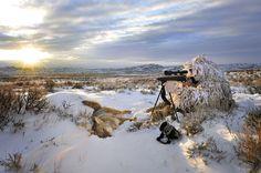Coyote Hunting: Tactics for hunting the breeding season (in February) Quail Hunting, Deer Hunting Tips, Hunting Camo, Coyote Hunting, Pheasant Hunting, Hunting Rifles, Turkey Hunting, Archery Hunting, Hunting Stuff