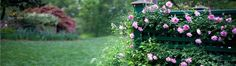 We have a rose expert in-house who plants, grooms and trains climbing roses.
