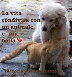 vita con gli animali