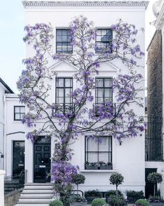 Wisteria Climbing Up A Home In South Kensington London - Architecture and Urban Living - Modern and Historical Buildings - City Planning - Travel Photography Destinations - Amazing Beautiful Places Baroque Architecture, Architecture Design, London Architecture, Building Architecture, South Kensington London, Kensington House, Purple Wisteria, Purple Wallpaper Iphone, Das Hotel