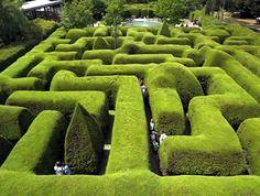 Lose yourself in the Ashcombe Maze & Lavender Gardens at Mornington Peninsula, Victoria. Australia's most famous three-metre high hedge maze and lavender labyrinth. Formal Gardens, Unique Gardens, Amazing Gardens, Beautiful Gardens, Famous Gardens, Garden Shrubs, Shade Garden, Landscape Design, Garden Design