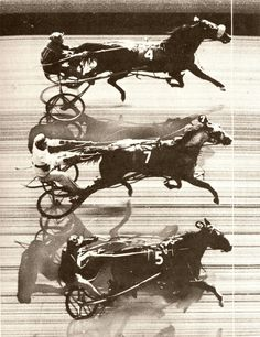 3 October 1953 - The first triple dead heat in harness racing occurred when Patchover, Payne Hall and Penny Maid dead-heated for a win at Freehold Raceway.