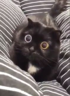 Those eyes😸👀 - We are giving away the first 50 car seat leash to spread the movement! Funny Animal Memes, Funny Animal Videos, Cute Funny Animals, Funny Animal Pictures, Cute Baby Animals, Animals And Pets, Funny Cats, Funny Quotes, Beautiful Cats