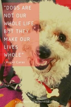 Our dogs are our best friends in the world without a doubt. Show your love and appreciation for these adorable doggos with these 21 inspiring dog quotes. John Grogan, Great Quotes, Inspirational Quotes, Cesar Millan, Little Puppies, Bichon Frise, Love You More Than, Dog Quotes, Inspire Others
