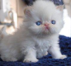 Precious! <3