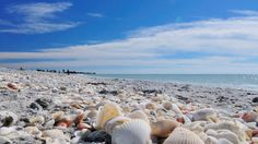 "Sanibel Island in Florida, known as one of the ""Shell Islands"""