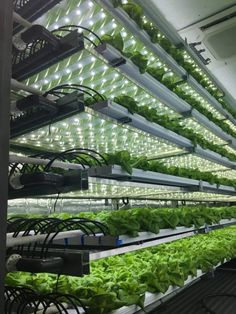 Go green and create your own hydroponics system by growing plants in water. Read on to learn 20 incredible ideas for DIY hydroponics Aquaponics System, Home Hydroponics, Hydroponic Farming, Backyard Aquaponics, Hydroponic Tomatoes, Vertical Hydroponics, Hydroponic Strawberries, Hydroponic Lettuce, Urban Agriculture