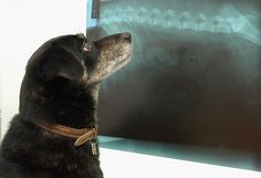 What to expect when your dog needs MRI