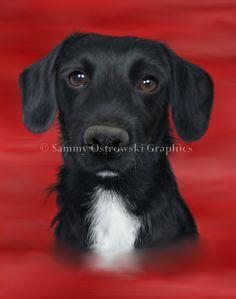 Poppy- Puppy. Digital Illustration.