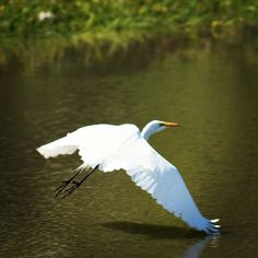 #Despegando hacia la libertad Cool Instagram Pictures, Bird, Animals, Political Freedom, Animales, Animaux, Birds, Animal, Birdwatching