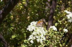 Kelebekler Vadisi Ölüdeniz