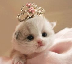 Cyoot Kitteh of teh Day: Lil'