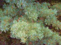 Wspaniała roslinność w tych ogrodach, więcej na http://skuterowewyprawy.eu/ogrody-tematyczne-hortulus
