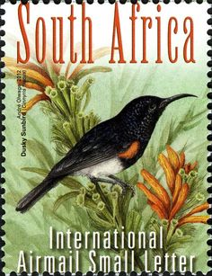 Stamps showing Dusky Sunbird Cinnyris fuscus, with distribution map showing range Rare Stamps, Vintage Stamps, South African Birds, Union Of South Africa, World Birds, Small Letters, Fauna, Stamp Collecting, Bird Art