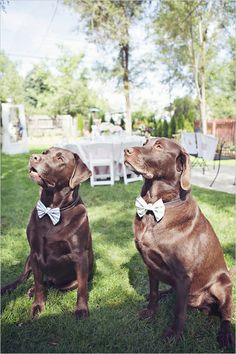wedding dog bow ties