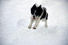Saltiamo nella neve
