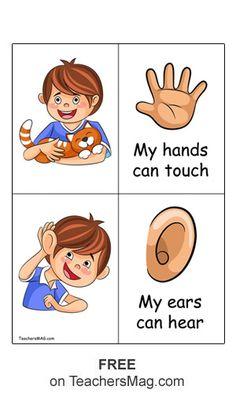 Five Senses Activity for Preschool Students. TeachersMag.com