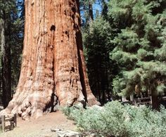 Explore General Sherman & the Sequoias