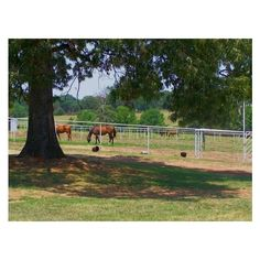 110 Acre Beautiful Horse Ranch in Powderly, Texas ❤ liked on Polyvore featuring backgrounds