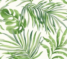 York Wallcoverings Light Green Candice Olson Tranquil Paradise Palm - Square Foot - Botanical - Non-Pasted Paper Wallpaper