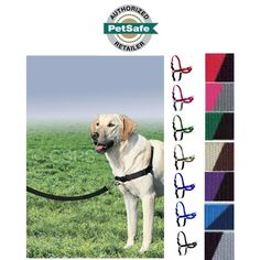 Have An Inquiring Mind Pet Safe Easy Walk Dog Harness Medium Comfortable And Stylish Lead Leash Home