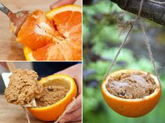 Peanut butter, oats and raisins inside a hollowed orange for an all natural bird feeder.