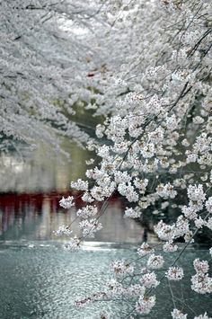 colours, white blossom, blue, grey, river
