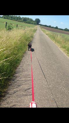 i have something for animals 🐾 #mydog #littlebaby #sweet #walkingwithmydoghahaha