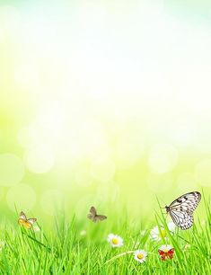Butterfly White Flower And Grass In Sunshine Bokeh Backdrop For Photo Powerpoint Background Free, Background Clipart, Picsart Background, Paper Background, Green Grass Background, Textured Background, Picture Story Writing, Boarders And Frames, Easter Wallpaper