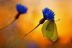 Butterfly and flower. Photo by Bartosz Dubiel.