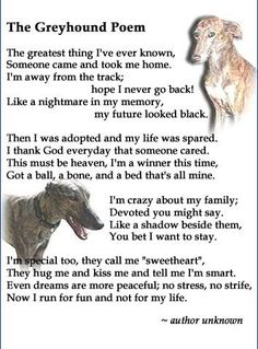 The Greyhound Poem - This just made me tear up, and have to go hug my Greyhound <3
