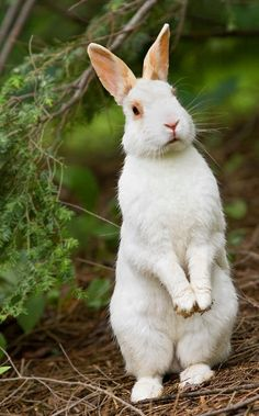 What's Up Doc [Peter Rabit]