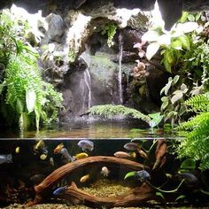 Pix For > Tree Frog Terrarium Ideas Planted Aquarium, Aquarium Aquascape, Nature Aquarium, Aquarium Fish Tank, Aquascaping, Fish Tanks, Aquariums Super, Amazing Aquariums, Tree Frog Terrarium
