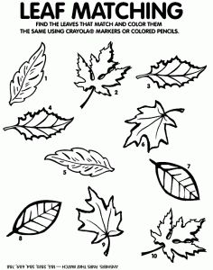 Great Visual Discrimination Activity - Fall Leaf Match - - Pinned by #PediaStaff.  Visit http://ht.ly/63sNt for all our pediatric therapy pins