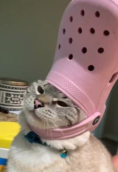 His Holiness The Pope: Pets With Crocs Hats - I Can Has Cheezburger? Cute Cat Memes, Cute Animal Memes, Animal Jokes, Cute Funny Animals, Funny Animal Pictures, Funny Cats, Cute Baby Cats, Cute Little Animals, Kittens Cutest