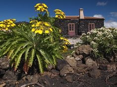 La Palma in Spain, right Echium brevirame Canary Islands, All Over The World, Street Photography, Spain, In This Moment, Mansions, House Styles, Plants, Canarian Islands