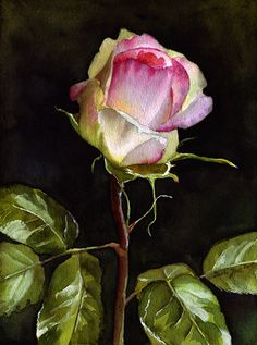 "'Eden Rosebud' Watercolor Painting - size: 8,8"" x 12"" (22,3 cm x 30 cm) painted on 280 Lb Hahnemuehle watercolor paper © Doris Joa"