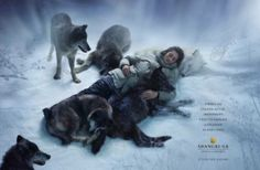 The Print Ad titled Wolf was done by Ogilvy & Mather Hong Kong advertising agency for product: Shangri-la Hotels & Resorts (brand: Shangri-la) in Hong Kong SAR China. It was released in May Story Inspiration, Writing Inspiration, Character Inspiration, Character Ideas, Hotel Ads, Pet Resort, Shangri La Hotel, She Wolf, Chant