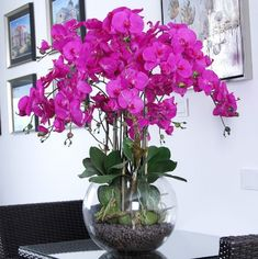 Phalaenopsis Orchids Care How to Plant Grow & Grow [Step-By-Step Water Culture Orchids, Orchids In Water, Purple Orchids, Orchid Pot, Orchid Plants, Phalaenopsis Orchid Care, Orchid Corsages, Orchid Drawing, Orchid Flower Arrangements