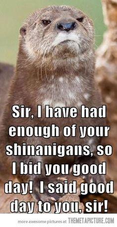 Offended Otter amusing-material