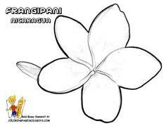 frangipani tree colouring in - Google Search