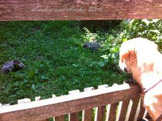 Amelies und Anelas Welt: Sinn oder Unsinn: Zoos töten gesunde Tiere