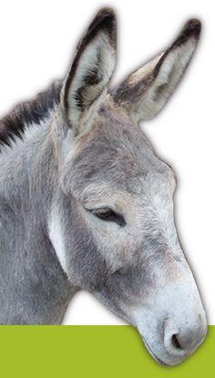 """Randonnées avec des âne bâtes chez """"Au pas de l'âne"""" entre Calvisson et Aigues-Vives. Découvrez des promenades faciles et insolites entre Camargue et Cévennes"""