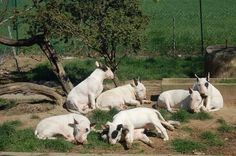 ,A herd of bullies !