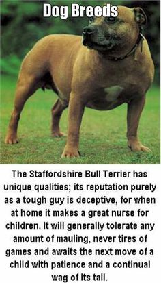 Dog Breeds  (courtesy of @Pinstamatic http://pinstamatic.com) - DogSiteWorld-Store - http://dogsiteworld.com - Staffordshire Bull Terrier