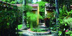 Ciudad verde: Conoce los jardínes botánicos que puedes visitar en la ciudad de México - MXCityMXCity