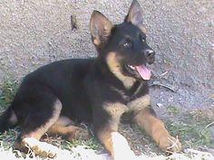 O Pet Shop e a cadelinha :: gilmar.terramaia