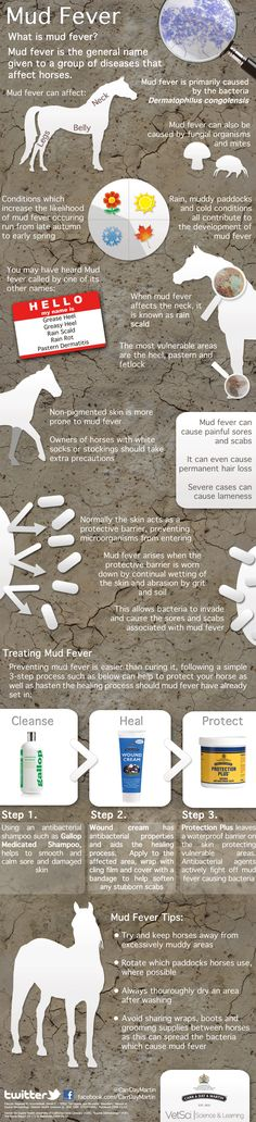 Mud Fever Mud Fever infographics infectious diseases