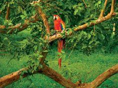 Selva Lacandona en Chiapas.  // 10 lugares para ser feliz