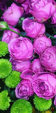 Beautiful Rose Flowers, Wonderful Flowers, Elegant Flowers, Love Rose, Exotic Flowers, Beautiful Flowers, Special Flowers, Beautiful Nature Wallpaper, Flower Quotes
